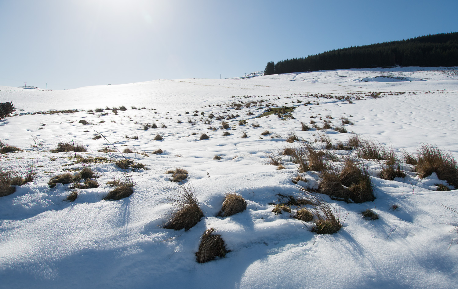 Sunshine and Snow - Photographer's dream | DSC_3044.jpg